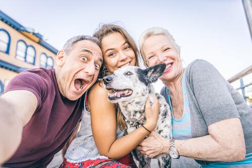 MimascotaCBD-cannabis-ayuda-mascotas