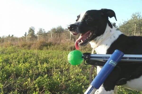 MimascotaCBD-Tulli-el-perro-feliz